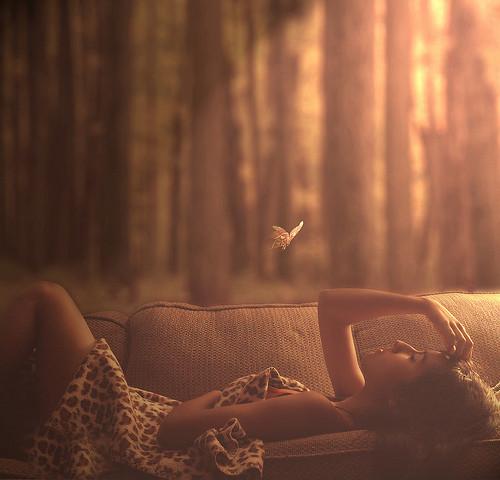 бабочка мечта